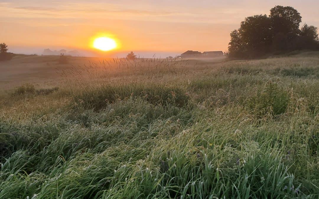 Morning Glory Starting a Beautiful Day