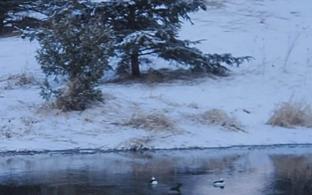 Pond 200415